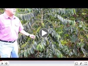 John Parry Explains about his plantation