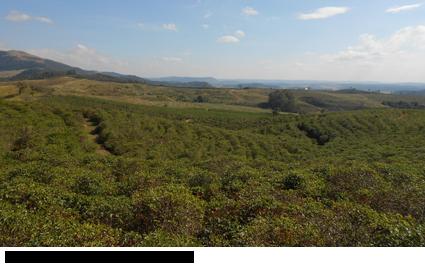 02-same-plantation-looking-towards-north